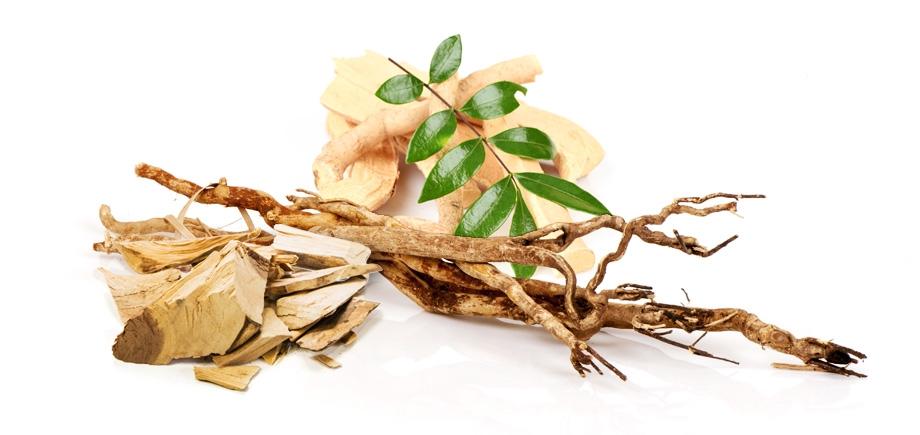 Tongkat Ali Root Benefits